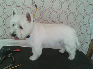 Kent and Sussex Mobile Dog Groomer
